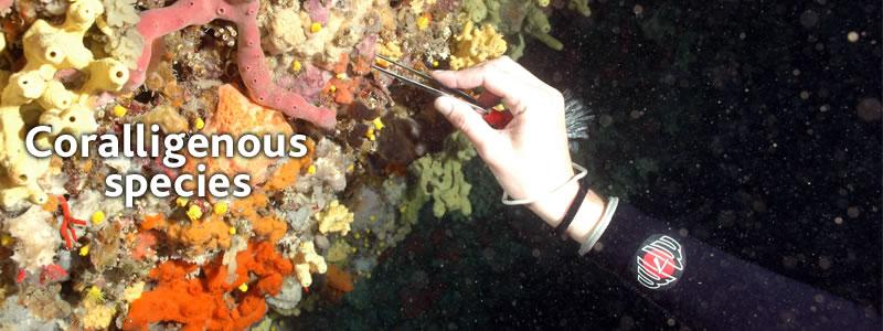 coralligenous-species-database